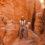 The Ultimate Pet-Friendly Southwest Road Trip Through Arizona and Utah